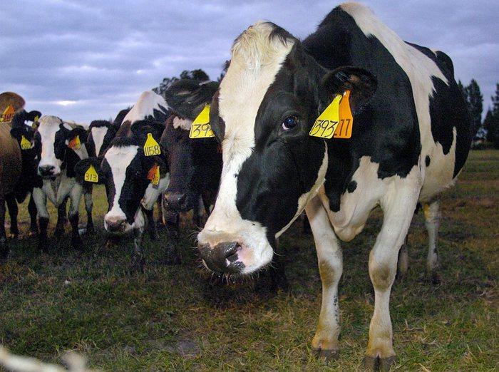 La Cina ha rimosso il bando sulla carne bovina italiana